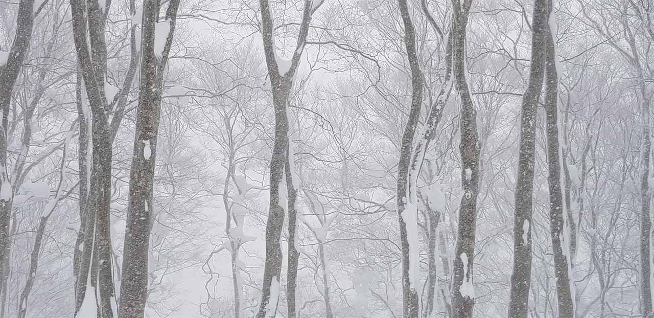 핫코다 호텔 객실 창밖 너도밤나무 숲 핫코다 산은 자연의 보고로 신록부터 단풍 그리고 설경을 즐길 수 있다