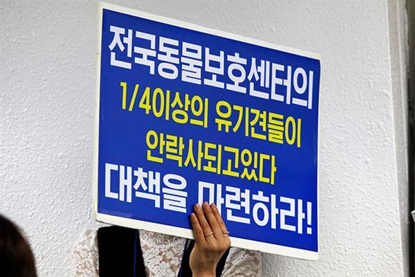케어 박소연 대표가 19일 오전 교대역 인근에서 기자회견을 갖고 안락사 논란에 대해 사과하는 한편 심경을 밝혔다. (사진= 인터넷언론인연대 제공)