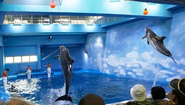 울산 남구 장생포고래생태체험관에서 점프 시범을 보이고 있는 큰돌고래. 환경단체는 돌고래쇼 중단을 요구하고 있다