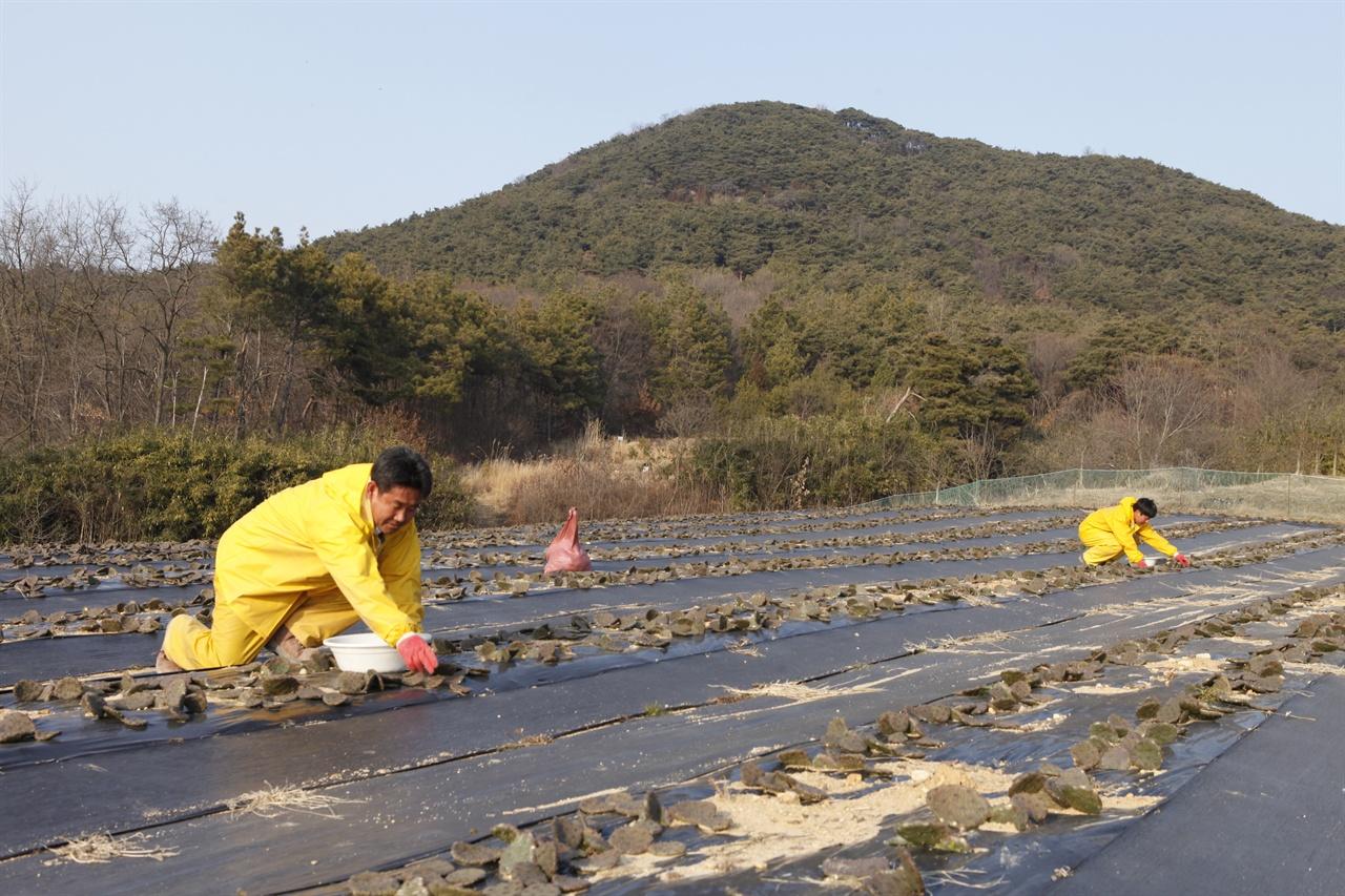 천년초농장  수확중 천뇬초를 수확하고 있는 재호씨와 아들 태광씨