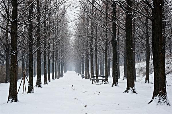 눈이 내리는 메타세쿼이아 숲