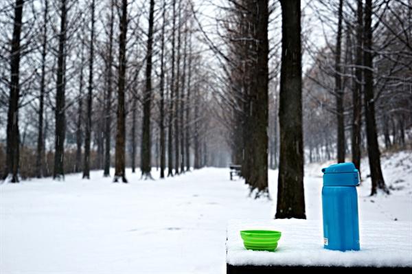 눈 내리는 메타세쿼이아 숲에서 커피 한 잔하다.