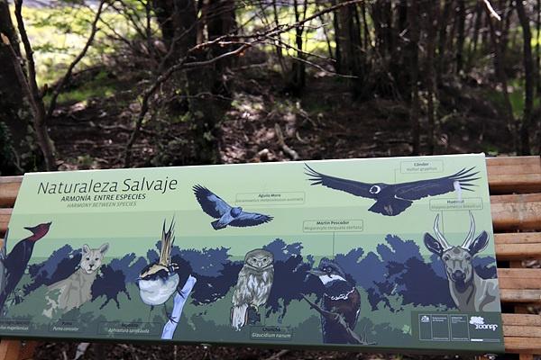 토레스 델 파이네 국립공원은 1978년 유네스코 생물보호구역으로 지정됐다. 트레킹 코스 중간에 있는 입간판에 이 곳에 사는 야생동물사진이 그려져 있었다