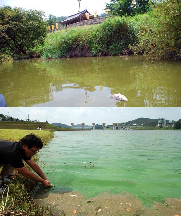4대강 사업 이후 유네스코 세계문화유산 공산성 앞과 공주보 주변은 녹조가 창궐하고 물고기 집단 폐사가 수시로 발생했다.