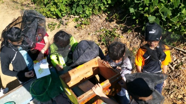 남상대님이 운영하는 가은농장에서 벌통을 단장하고 꿀벌을 들여보내고 있는 아이들