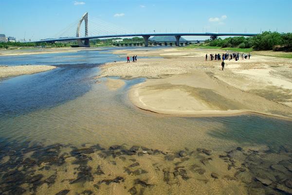 세종보 수문이 개방되고 강바닥에 쌓였던 펄층이 씻기고 모래톱이 생겨나면서 맑은 강물이 흘러내리고 있다.