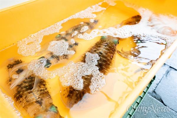오징어 중에서도 가장 맛있는 것이 무늬오징어다. 회도 맛나지만 살짝 데치면 회에서 느낄 수 없는 단맛까지 더해진다. 몸통의 두께가 여느 오징어보다 두꺼워 씹는 맛 또한 일품이다. 무늬오징어를 어느 곳에서는 흰오징어, 쥐오징어로도 부르지만, 실제 이름은 흰꼴뚜기다.