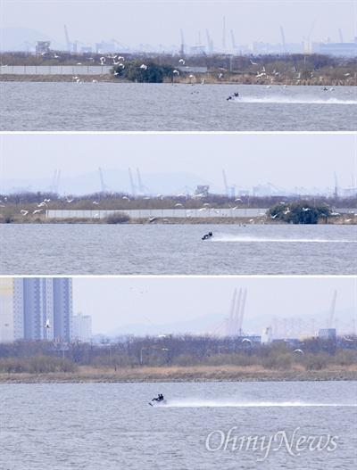 3월 3일 낙동강 하구에서 수상오토바이 1대가 큰고니떼를 향해 달려가고 있는 장면이 포착되었다.