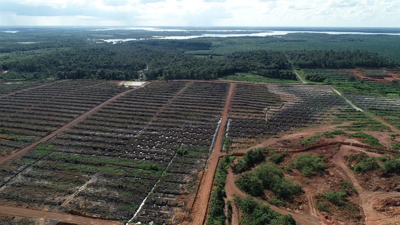 인도네시아에 있는 한국기업의 팜유 농장