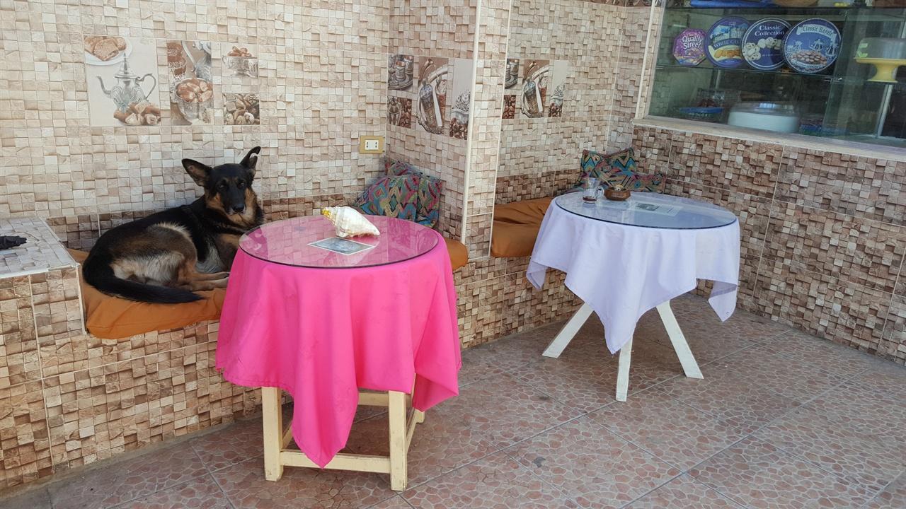 호텔 입구 탁자 의자에 앉아 있는 개. 다합은 이런 풍경이 흔하다.