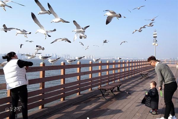 갈매기들이 낮게 날아다니는 서해안 포구.