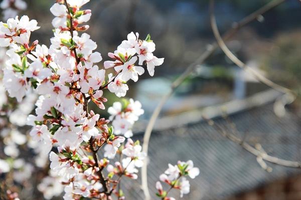 소년의 봄은 언제 올까?