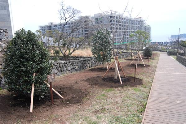 전체 11개 나무 가운데, 8개는 자리를 지키고 있다.