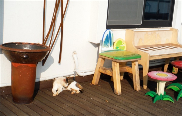 연홍미술관에서. 고양이의 한가로움이 참 평화스러웠다.