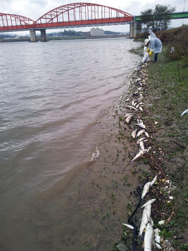 2012년 금강에서 발생한 물고기 떼죽음은 10일간 60만마리 이상의 물고기가 죽었다. 환경부·국토부·수자원공사·자치단체에서 죽은 물고기를 수거하고 있다.