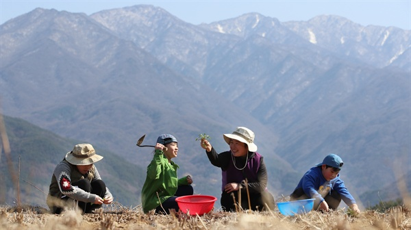지리산 아이들의 봄나물 캐기.