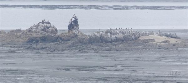 오이도 앞바다에 떠있는 황새바위섬.
