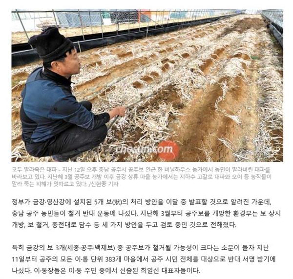 조선일보 캡처 사진.