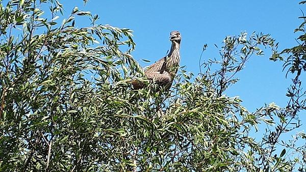 길옆 나무위에 새 한마리가 관광객들을 내려다보고 있었다