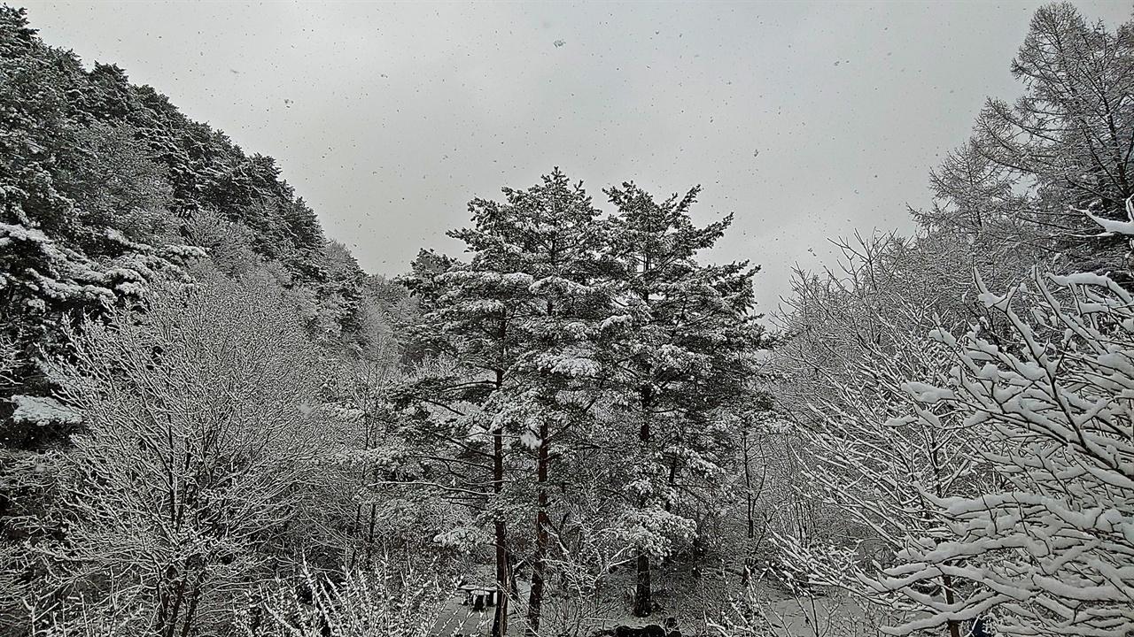 봄눈 속의 풍경 산수유꽃에 쌓이는 눈을 촬영하다 30분가량 방에 들어갔다 다시 나왔다. 그새 세상은 전혀 다른 풍경으로 변했다.