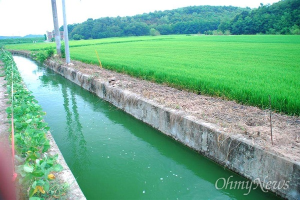 지난해 여름, 금강 양수장에서 취수한 강물이 농수로를 통해 농경지로 유입되고 있다.
