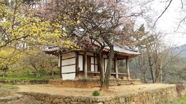 푸르름 오기 전, 봄꽃에 둘러싸여 있는 환벽당
