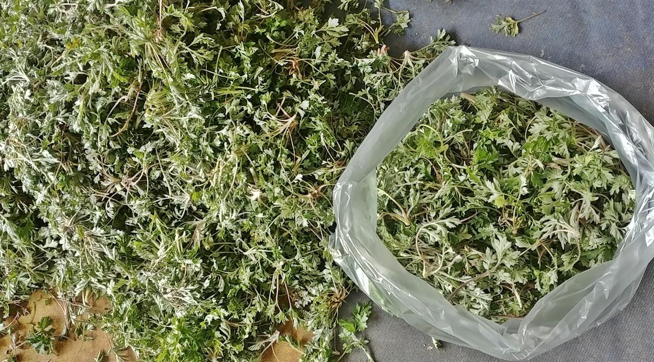 쑥은 어린잎으로 도다리쑥국을 끓이거나 쑥버무리 또는 쑥떡을 해먹는다.