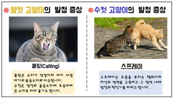 길고양이의 발정기 증상