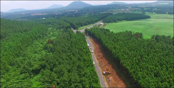 비자림로 공사 구간에서 가장 먼저 벌채가 시작된 곳은 3구간인 금백조로 입구 주변이다.