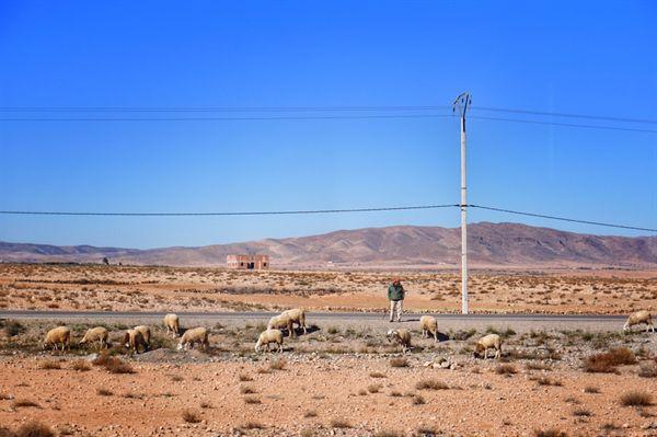 모로코 시골의 양, 염소떼와 목동