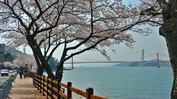 왕지벚꽃 길과 한데 어우러진 두 개의 대교는 한 폭의 그림인 듯 아름답다.