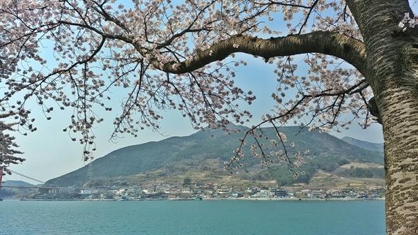 남해대교 아래 왕지벚꽃 길의 벚꽃도 활짝 피었다.
