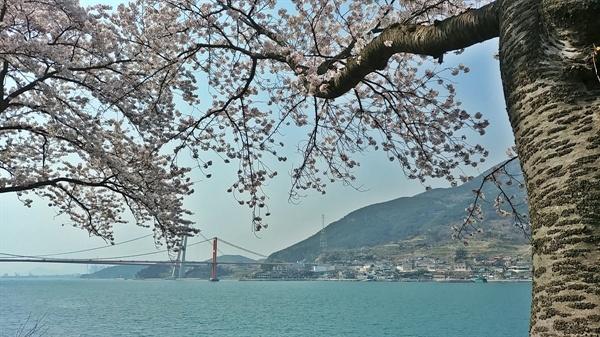 푸른 바다와 하얀 벚꽃 너머의 현수교는 아름답다 못해 탄성을 자아낸다.