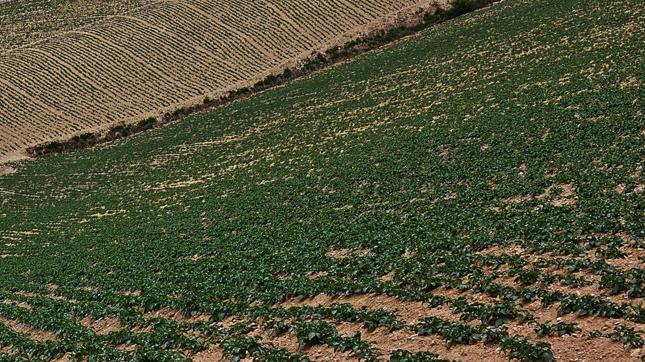 감자밭 오래전 구룡령 아래 증골(정씨를 증씨로도 발음했다. 정씨가 사는 골짜기라 해서 증골이라 불렀고 지명으로 정해졌다)에 살던 큰아버지는 3월 말로 접어들면 소를 부려 밭갈이를 시작했다. 감자와 옥수수는 집 주변 밭에 심고, 콩과 팥 등 다른 곡물은 예전에 할아버지가 사셨던 빈지골(빈집골이 원형으로 집을 버려두고 나와 그렇게 지명이 됐다.)에 심었다.