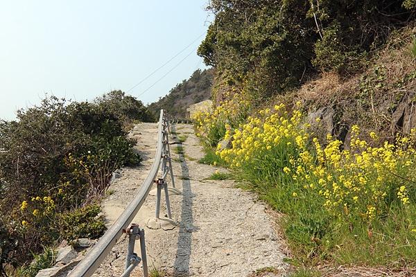 횡간도 마을로 가는 꼬부랑길에 유채꽃이 만발했다