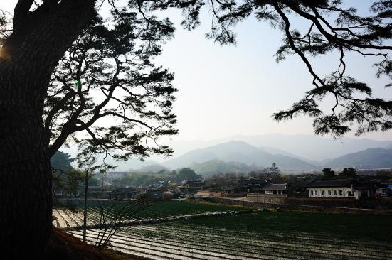 마을 전경 소나무 군락지에서 바라본 개평리 마을의 봄 풍경