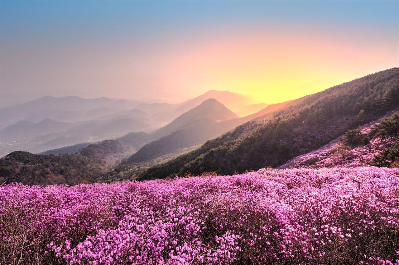 창원 천주산의 진달래 꽃대궐  울긋불긋 꽃 대궐이 펼쳐져 장관이다.