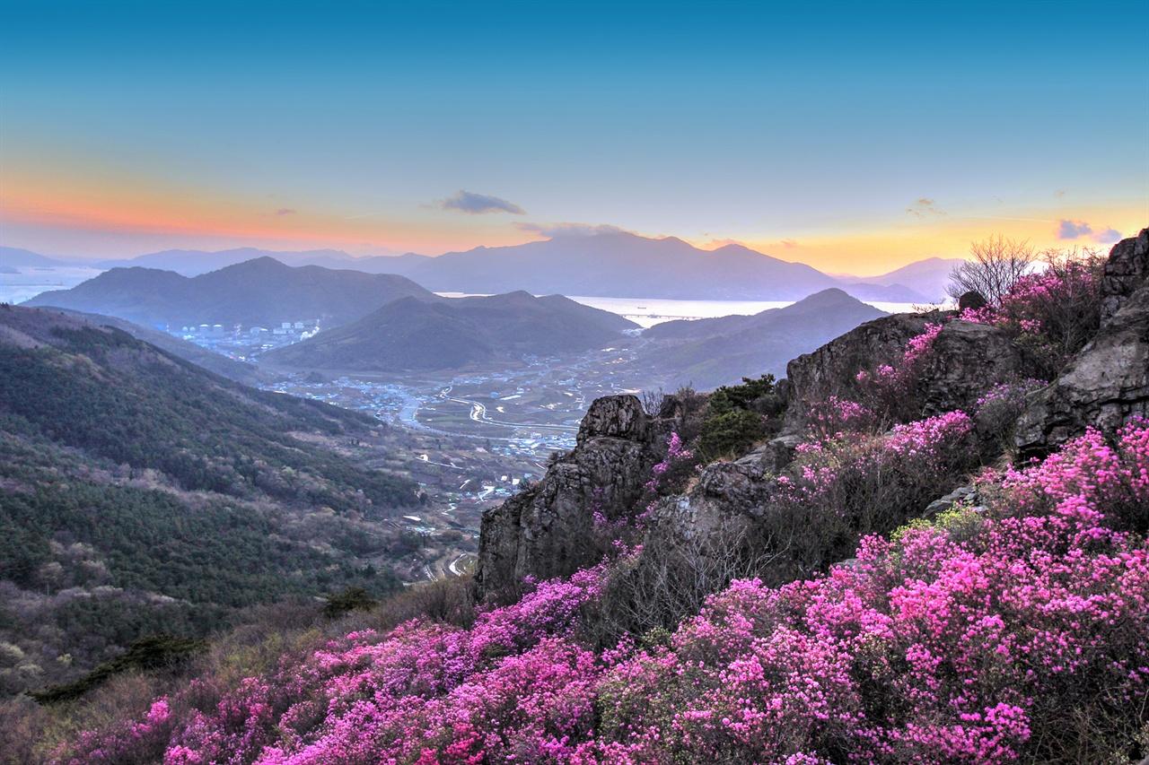 여수 영취산의 루비빛 진달래 떠오르는 햇살을 받아 진달래가 루비처럼 반짝인다.