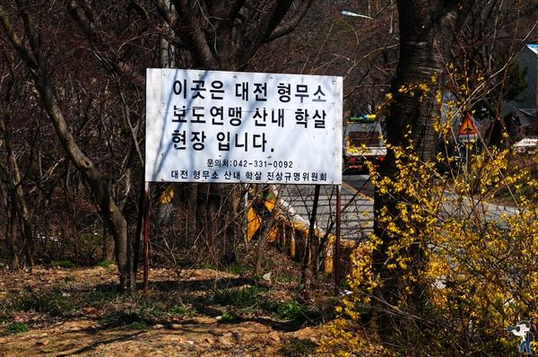 산내 골령골 표지판 앞에 핀 노란 개나리. 개나리꽃이 산내 골령골의 봄을 알려줍니다.
