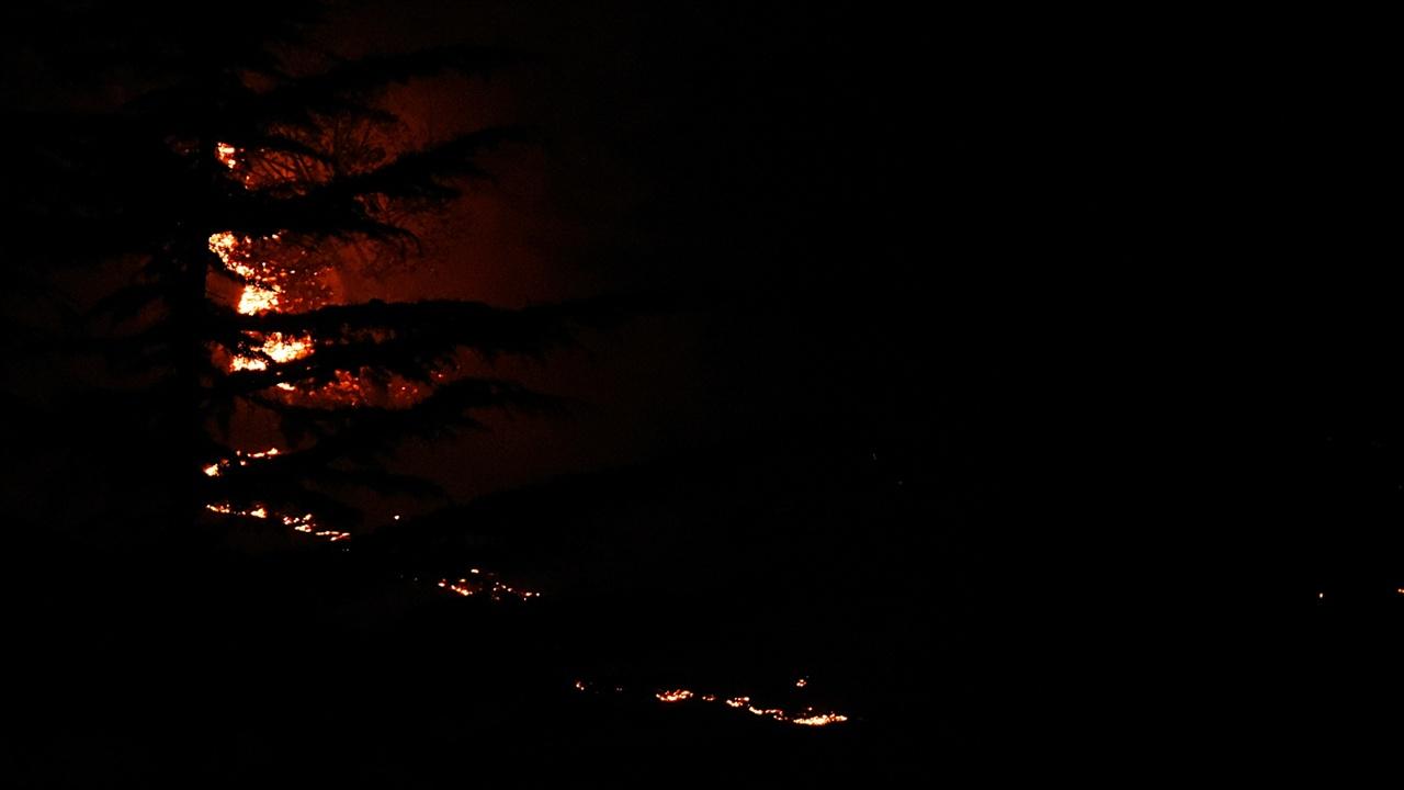 화염에 휩싸인 조경수 오랜 세월 정성들여 가꾼 영랑호골프장의 조경수들이 불길에 휩싸여 타고 있다.