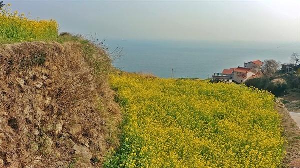 유채꽃, 마을, 쪽빛바다가 아름다운 곳이다.