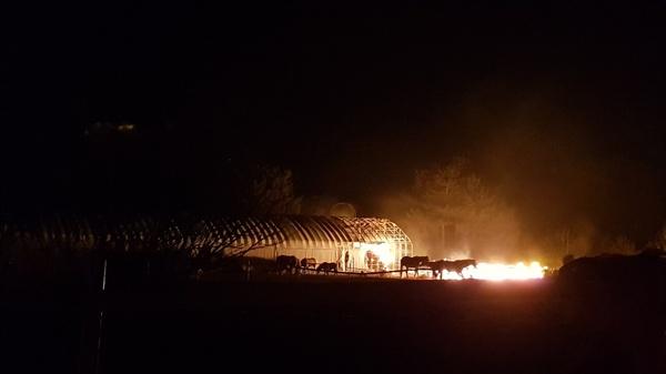 불타는 승마장 불타는 승마장의 마사와 말들