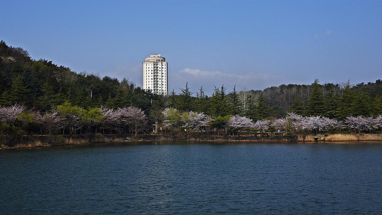 벚꽃 핀 영랑호 맑은 식목일 오전, 이 풍경만으로는 지난밤의 악몽 같은 순간을 어찌 알까.