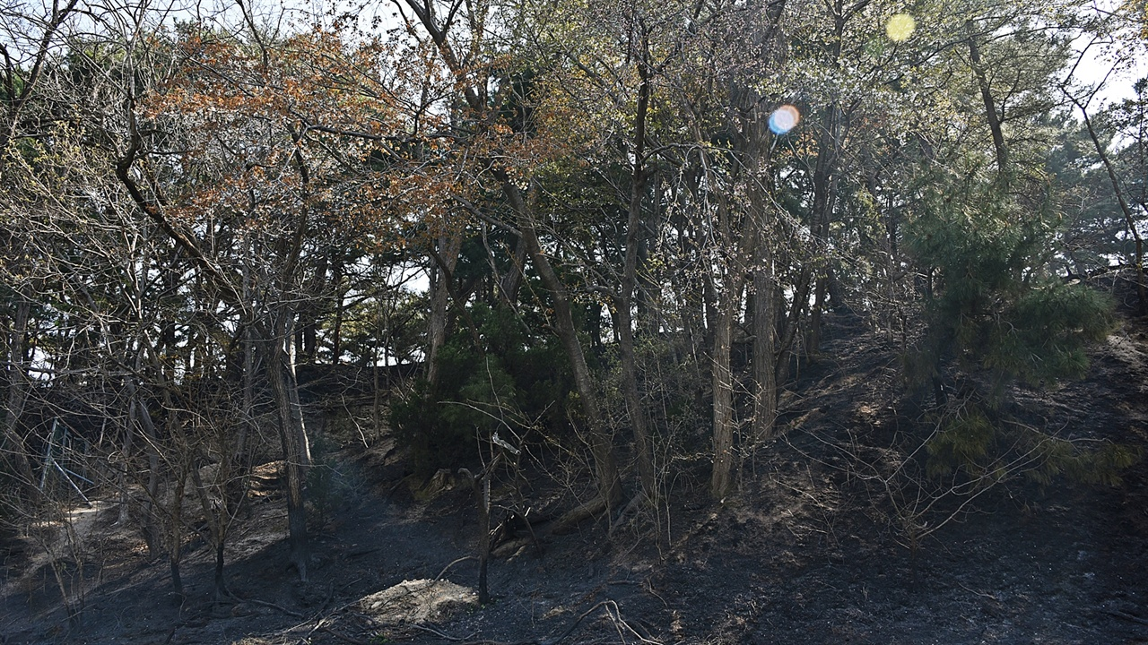 불에 탄 숲 이 숲으로는 지난 밤 치솟은 화염은 말이 안 된다. 분명 큰 화염을 가리키려 보광사가 탄다고 했다.