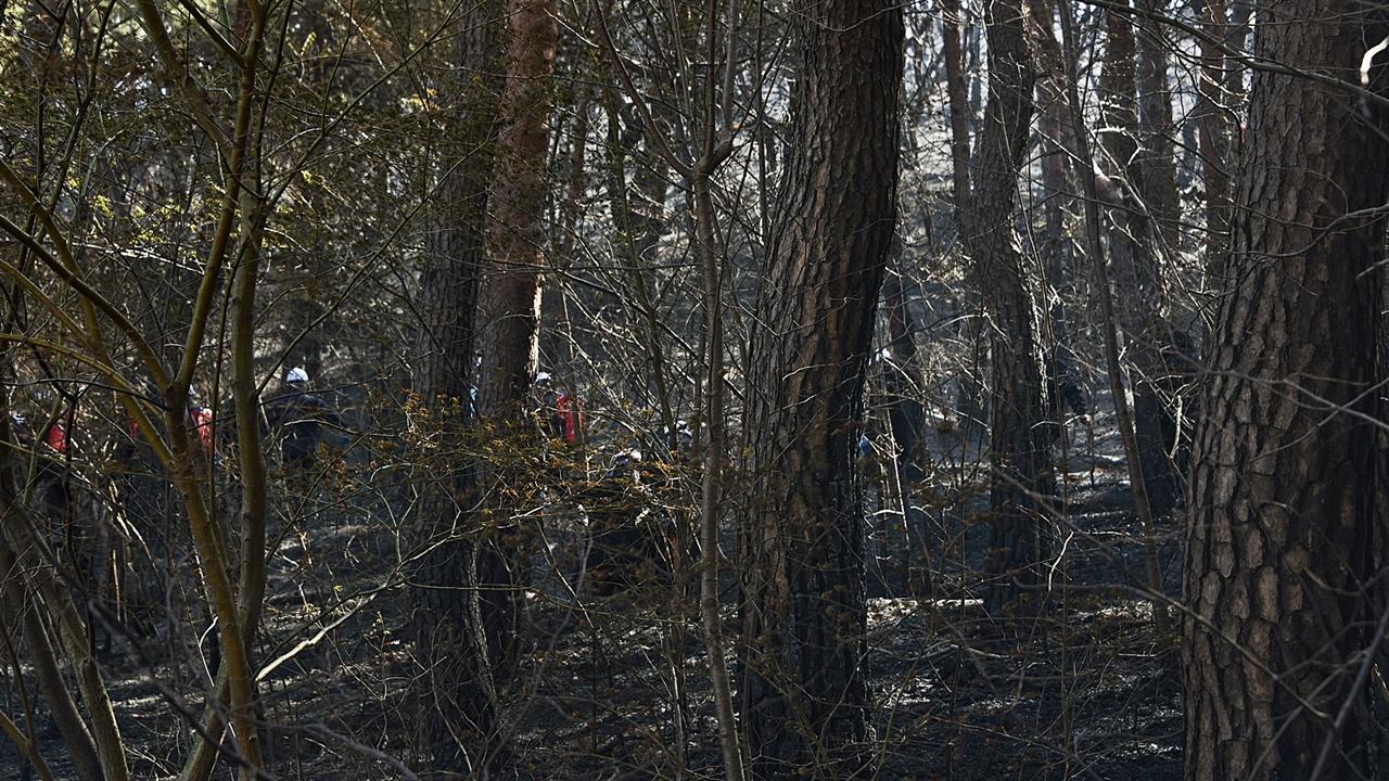 잔불진화반 불에 탄 보광사 숲으로 잔불진화반원들이 들어가고 있다. 적어도 이들에게 장갑 한 켤레, 미세먼지를 차단할 마스크 하나씩이라도 전해줄 도량은 지녔기를 바라면 큰 욕심일까.
