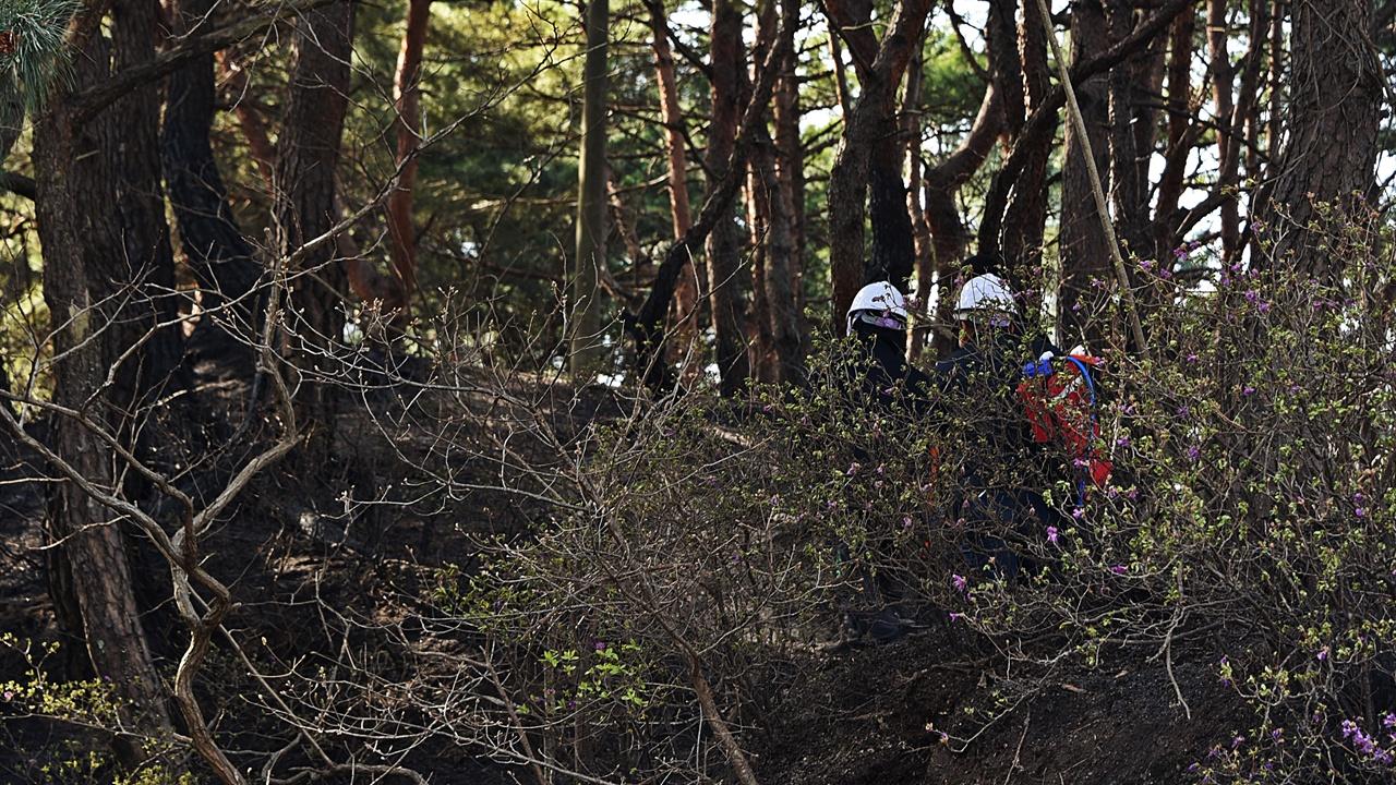 속초 보광사 뒤 소나무 숲 이 소나무 숲으로 들어설 때까지만 해도 꿈에도 몰랐다. 보광사가 보존됐으니 가볍게 산불이 스쳐지나갔다고 믿었다.