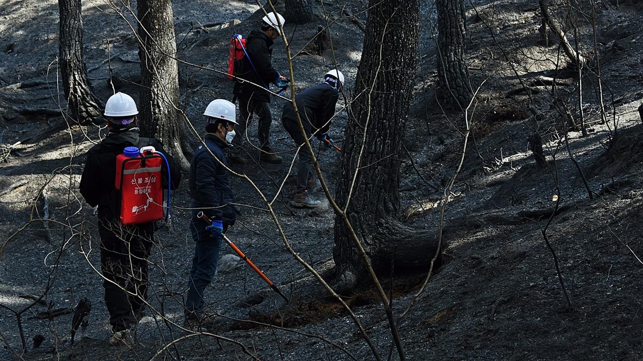 소나무 숲 잔불진화 대부분 남녀 1명씩 조를 이뤘으나 남자끼리 조가 편성된 팀들이 있다. 이들은 깊은 곳에 숨은 잔불을 파내는 일을 했다.