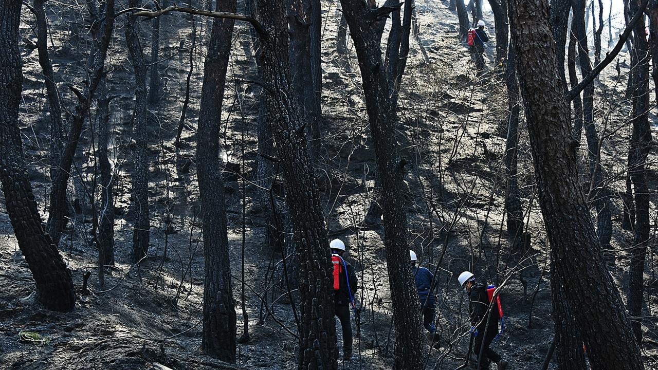 잔불진화반원들 먹으로만 그린 그림이랄까? 소나무 숲이 새까맣게 불탄 현장에서 행여라도 숨은 잔불이 있을까 살피며 잔불진화작업을 하는 진화반원들.