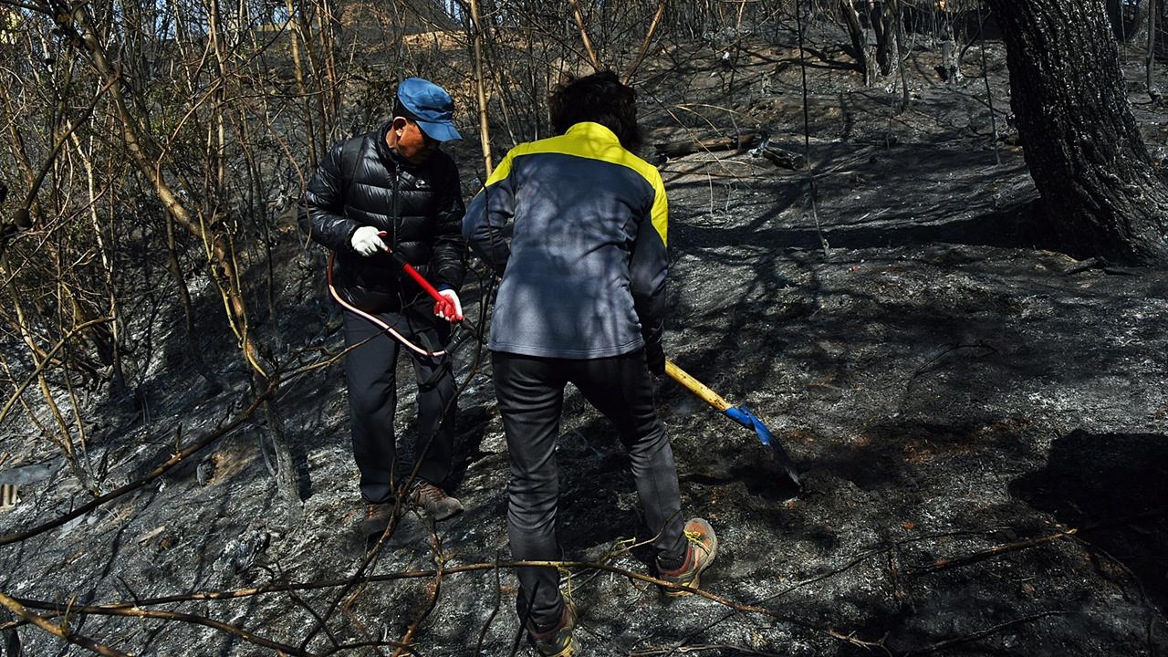 잔불진화반원들 삽으로 흙을 뒤집자 연기가 피어오른다. 불씨에 물을 뿌려 불을 끈다.