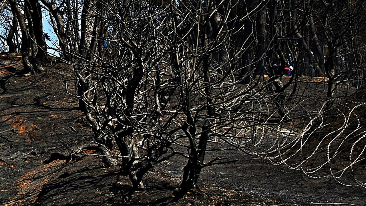 야산 산책로 철조망 어떤 헛된 욕망이 이 자연, 나지막한 소나무 숲 산책로에 보기에도 사나운 철조망을 쳤는가.